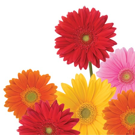 Gerbera Bouquet 3-Ply Beverage Napkins