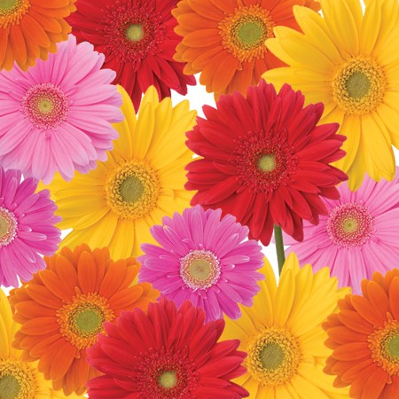 Gerbera Bouquet 3-Ply Lunch Napkins