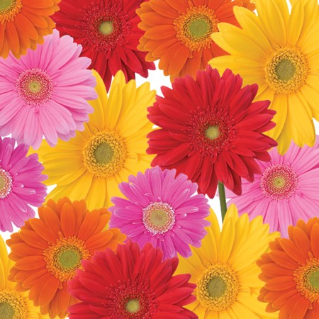Gerbera Bouquet 3-Ply Dinner Napkins