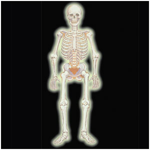 Glow-in-the-Dark Jointed Skeleton Cutout- 35 Inch