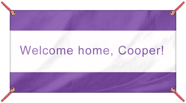 Purple - Custom Banner